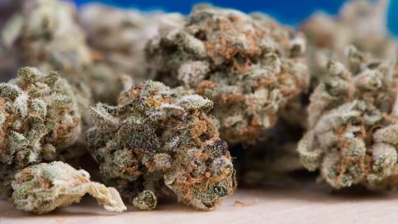 Captură de cannabis
