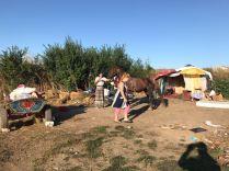 Autoritățile constănțene și firma de salubrizare Polaris au desființat locuintele improvizate
