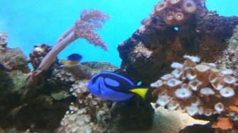 Acvariu cu pești exotici. FOTO Cătălin Schipor