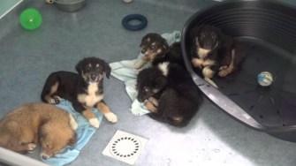 Adăpostul de animale de la Cernavodă. FOTO Captură Video