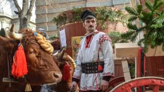 Pentru procesiunea de Bobotează au fost aduse care cu boi. FOTO Cătălin Schipor