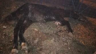 Calul bătut a fost abandonat în drum. FOTO Facebook