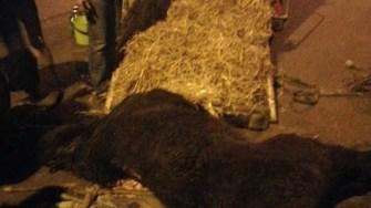 Calul bătut a fost preluat de un ONG. FOTO Facebook