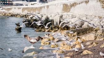 Fiecare furtună la malul mării are farmecul său. FOTO Cătălin Schipor
