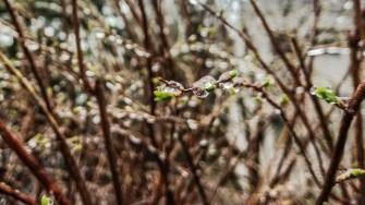Toate plantele au fost învelite într-un strat subțire de gheață. FOTO Cătălin Schipor
