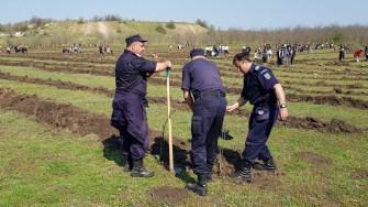 Plantare de salcâmi la Cumpăna. FOTO CTnews.ro