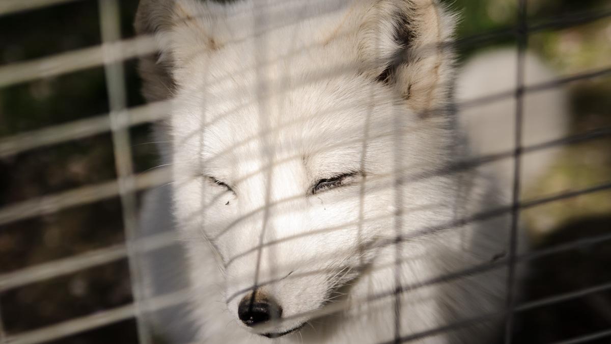 Vulpe alba cmsn microrezervatie (3)
