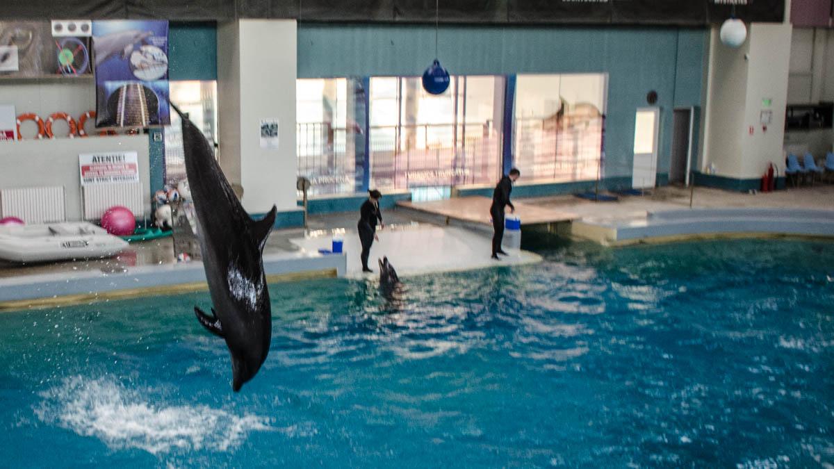 Delfini Delfinariu (10)