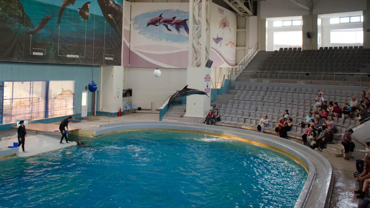 Delfini Delfinariu (3)