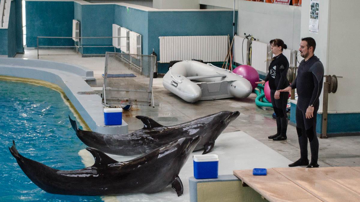 Delfini Delfinariu (32)