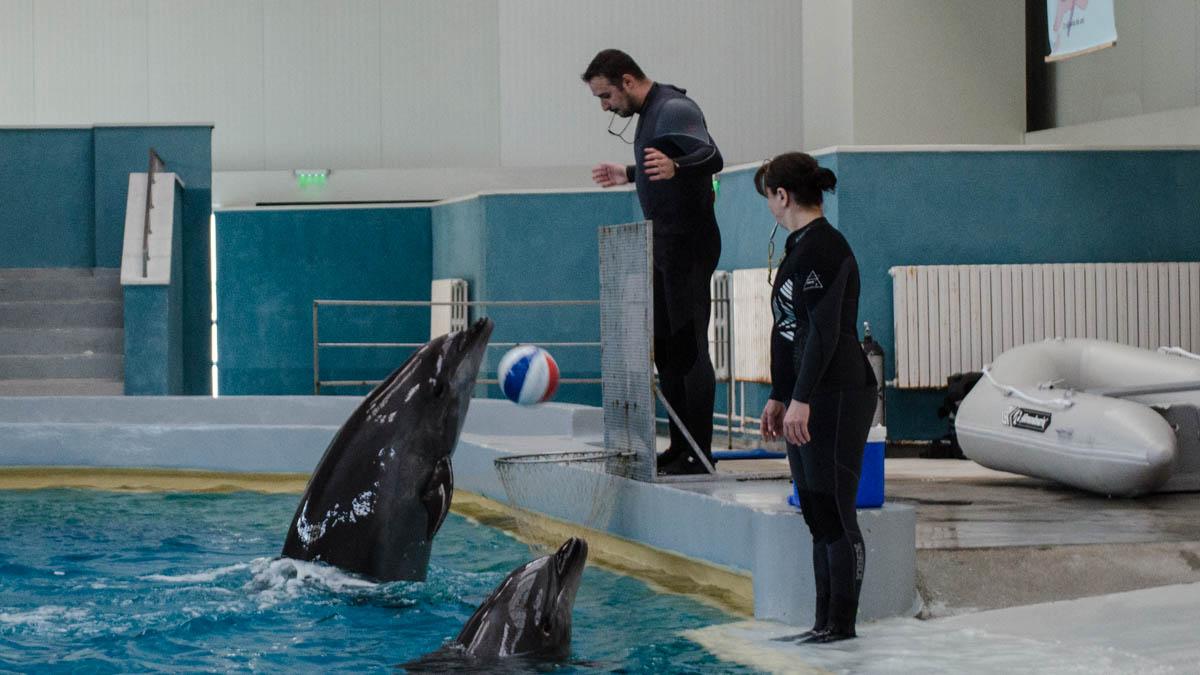 Delfini Delfinariu (35)