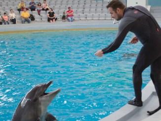 Delfinii, la joacă. FOTO Cătălin Schipor