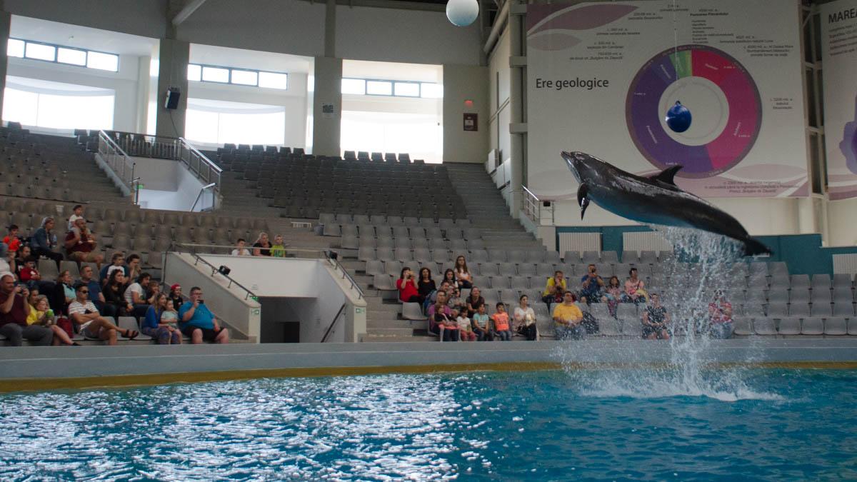 Delfini Delfinariu (47)