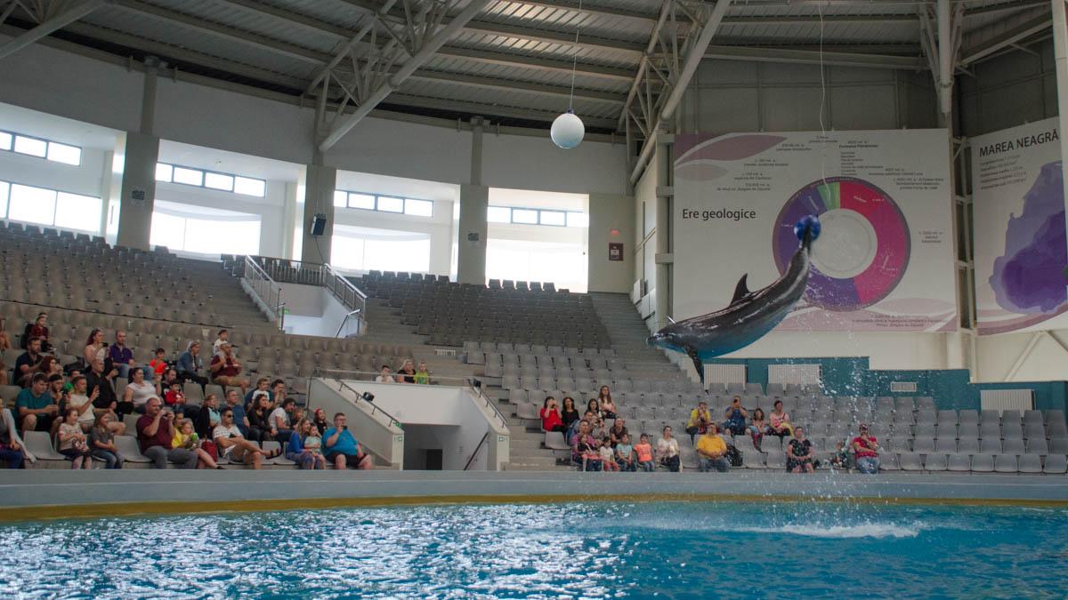Delfini Delfinariu (48)