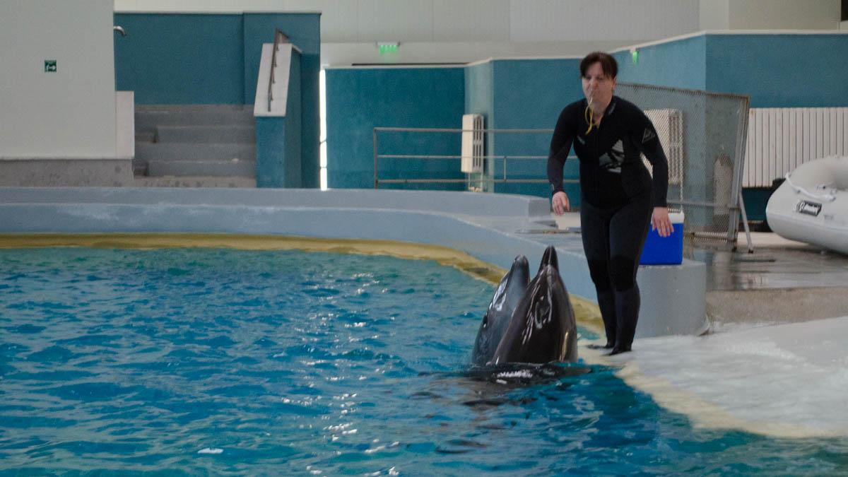 Delfini Delfinariu (52)