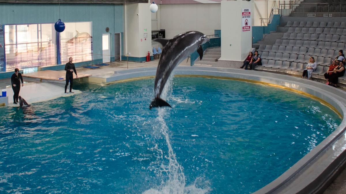 Delfini Delfinariu (6)