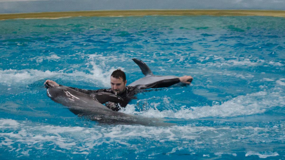 Delfini Delfinariu (60)
