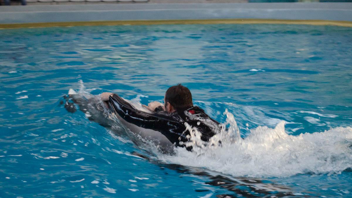 Delfini Delfinariu (65)