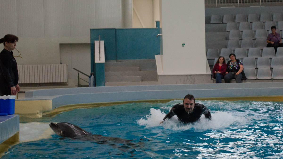 Delfini Delfinariu (71)
