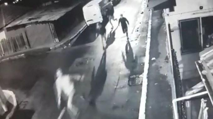 Vandalii surprinși de camerele de supraveghere. FOTO Captură Video