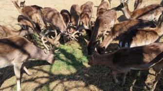Animalele de la CMSN Constanța au trecut la meniul de primăvară. FOTO CMSN Constanța