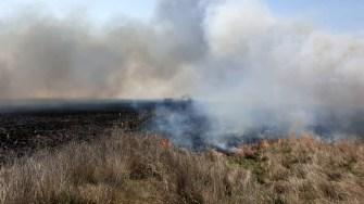 Incendiul s-a extins foarte repede din cauza vântului. FOTO ISU Dobrogea