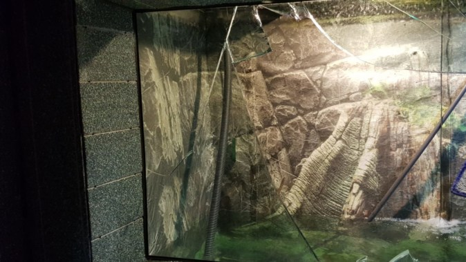 Acvariul s-a spart și a rănit o persoană. FOTO adrian Bîlbă