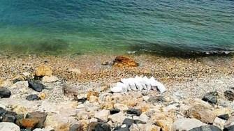 Nisipul de pe plajă nu este gratuit. FOTO ABADL
