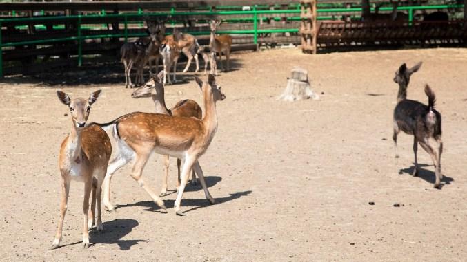 Se deschide Baby Zoo, un program dedicat copiilor între 5 și 10 ani. FOTO CMSN Constanța