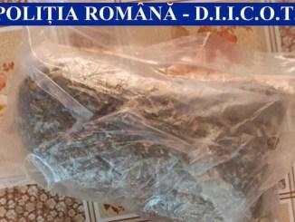 Percheziții la persoane bănuite de trafic de droguri în Cernavodă. FOTO IPJ Ialomița