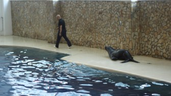 Lei de mare patagonezi la Delfinariul din Constanța. FOTO CTnews.ro