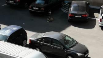 Copil atacat de câini fără stăpân la Năvodari. FOTO Adrian Daniel Stroe