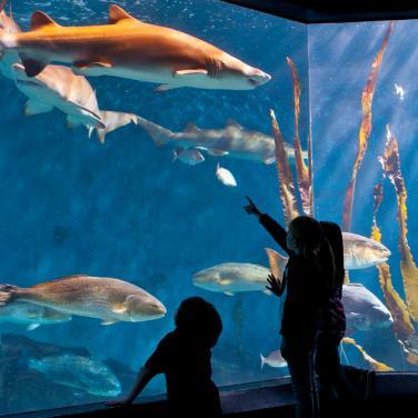Image result for maritime aquarium, norwalk free pictures