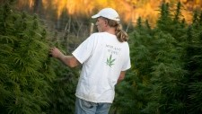 Medical marijuana users can grow pot