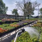 Champaign Park District sells off annual flowers due to COVID-19