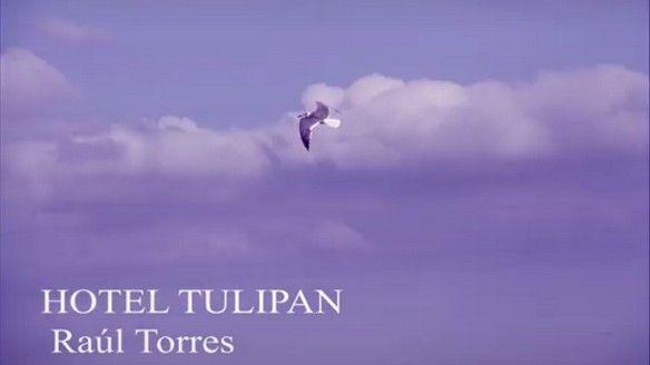 Paloma volando cielo cubano