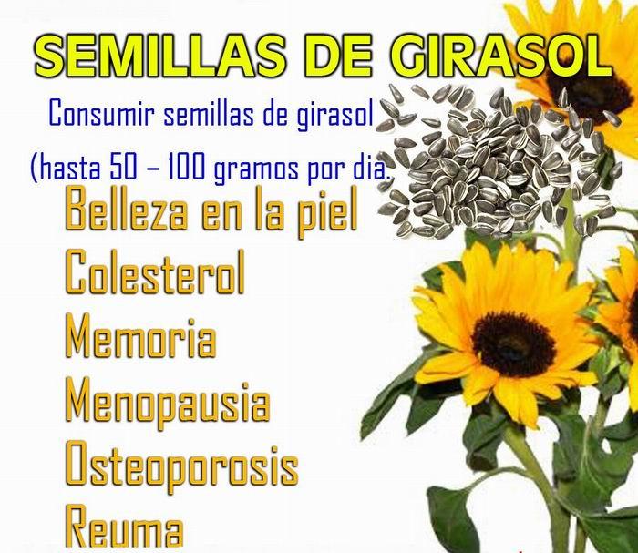 Las semillas de girasol: historia y beneficios