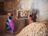 mujeres-trabajando-en-una-fabrica-de-jengibre-y-especias-en-la-seleccion-de-raices-de-jengibre-en-el-area-de-fort-cochin-el-23-de-noviembre-de-2011-en-cochin-kerala-india-eyeswideopengetty-images