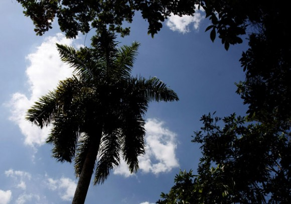 Un alto al fuego para recordar la Cuba que tenemos. Foto: Ismael Francisco