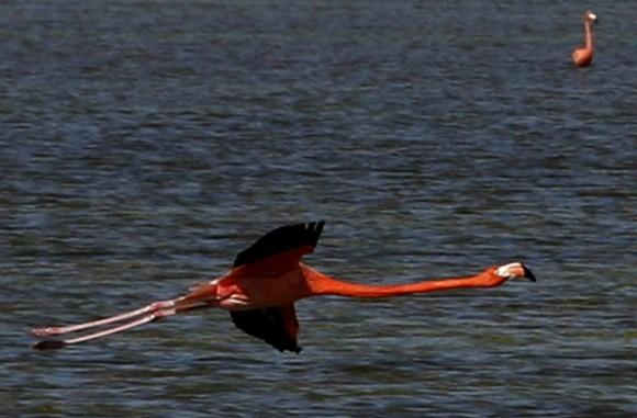 Playa Girón, hoy. En paz, evocador. Foto: Ismael Francisco
