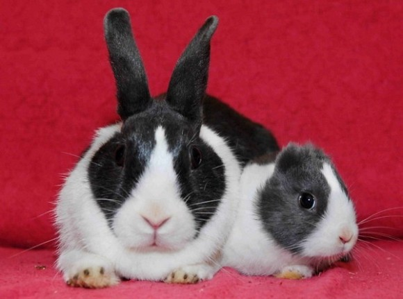 conejo-sin-orejas