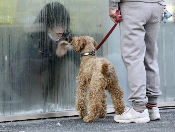 Una niña aislada para pasar la pruebas de detección de radiación mira a su perro a través de una ventana en Nihonmatsu, Japón, el 14 de marzo. (Reuters / Yuriko Nakao)