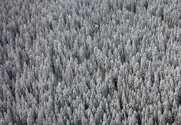 Bosques de pino cubiertos por la nieve., cerca del centro de Bosnia. Foto: Dado Ruvic. Reuters