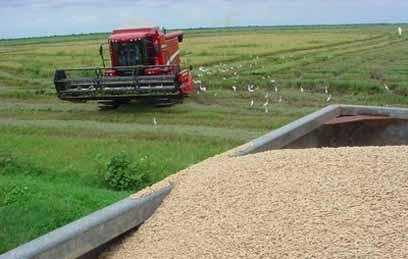 produccion_arroz_vertientes
