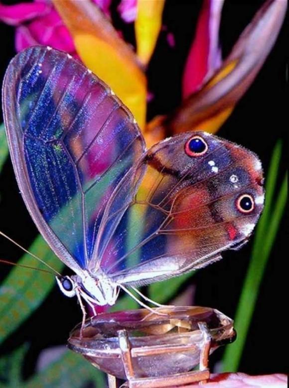 Mariposa Fantasma. Foto talesmaze.com