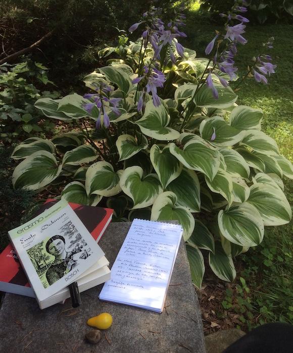 Como testigo, un montecito de violetas africanas, dos abejas y un banco de piedra en el jardín de Emily Dickinson, en Amherst.