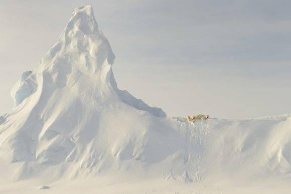 """""""Esta foto fue tomada adentrándose mucho en el hielo marino en el estrecho de Davis, a la altura de las costas de la isla de Baffin. Esta madre y su osezno están encaramados sobre un enorme témpano cubierto de nieve que se """"incrustó"""" cuando el océano se congeló en invierno. Para mí, la relativa """"pequeñez"""" de estas criaturas enormes en contraste con la inmensidad del témpano representa en la foto la fragilidad que caracteriza la dependencia de los osos polares del mar y del hielo para su existencia"""" – John Rollins John Rollins / National Geographic Travel Photographer of the Year Contest"""