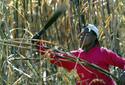 Cortador de caña en Cuba