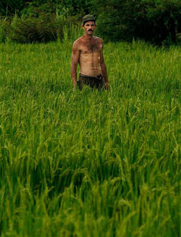Un campesino cultiva arroz en Bahia Honda, Pinar del Rio. (AP)