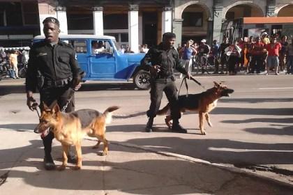 Técnica canina en la calle, sin bozal van los perros